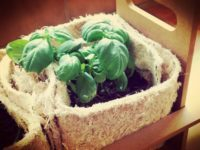 Pot Végétal par lot de 5
